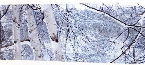 シラカンバ樹液